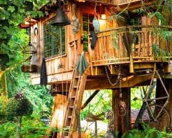 Play Silence of Tree Houses