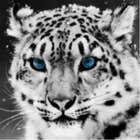 avatar for lightningclaw
