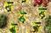 Play RTS War