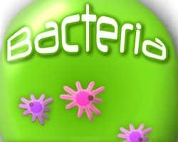 Play Bacteria