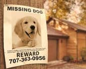Play Missing Goldy
