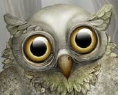Play Cute Owl 2