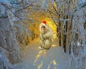 Play Crazy Christmas Escape