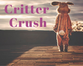 Play Critter Crush Cuteness