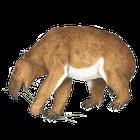 avatar for tapir