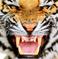 avatar for amb3