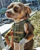 avatar for bomEagle
