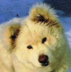 avatar for cheyannacheyanna