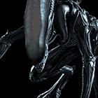 avatar for UnrealFox