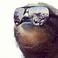avatar for poppopt