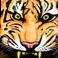 avatar for anniebanny1