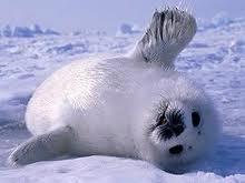 avatar for Iceorama