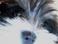 avatar for Shamansprite