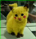 avatar for NeonWaterMellon