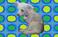 avatar for MalyWilk