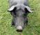 avatar for blackpig688
