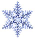 avatar for winterbloom