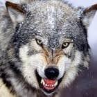 avatar for TiagoF33