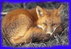 avatar for Leeazu