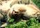 avatar for Loulana