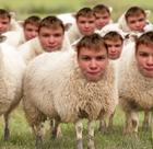 avatar for haystackbelue