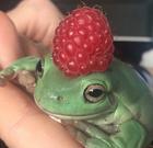 avatar for FroggoBonano