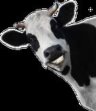 avatar for MICHAELMOORE51