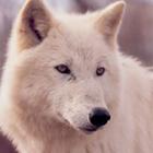 avatar for Zeda2424